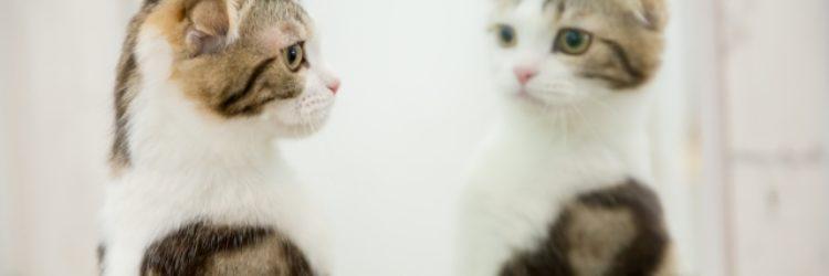 ついイライラしちゃう人のための人間関係を変える鏡の法則 相手をゆるす方法